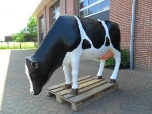 Koe kop omlaag A
